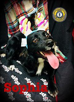 Adopt A Pet :: Sophia  - Nicholasville, KY