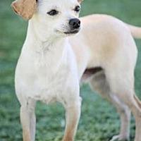 Adopt A Pet :: Pierre - Scottsdale, AZ