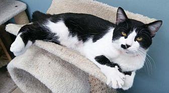 Adopt A Pet :: Holden  - Mt Vernon, IN