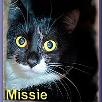 Adopt A Pet :: Missie (formerly Izzie) - Aldie, VA