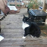 Adopt A Pet :: Zoey - Virginia Beach, VA