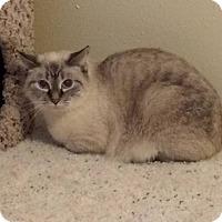 Adopt A Pet :: Chris - Ogallala, NE