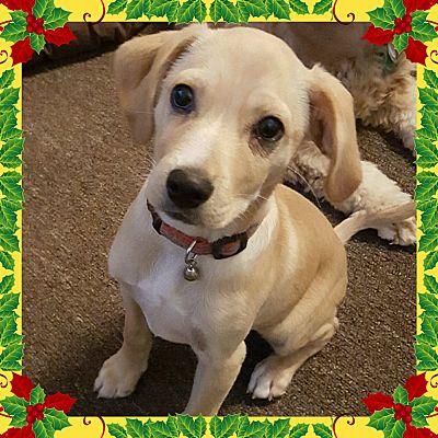 Sacramento, CA - Cocker Spaniel. Meet Eddie-ADOPTED! a Dog for Adoption.