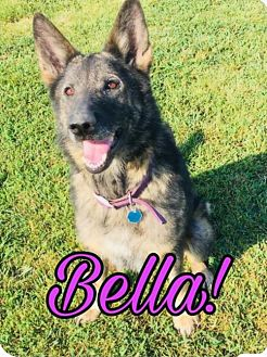 Adopt A Pet :: Bella  - Mt Vernon, IN