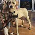 Adopt A Pet :: Stormy/Schatzie