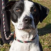 Adopt A Pet :: Chloe Bell - Tanner, AL