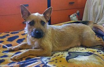 Adopt A Pet :: Reba  - Mt Vernon, IN