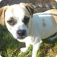 Adopt A Pet :: Lucky - Lebanon, CT