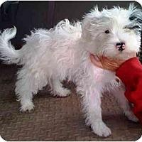 Adopt A Pet :: Polo - Houston, TX