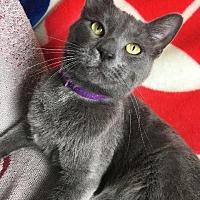 Adopt A Pet :: Samwell Tarly - St. Louis, MO