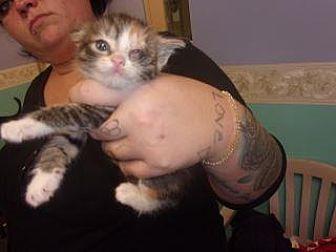 Adopt A Pet :: Hocus Pocus  - Princeton, WV