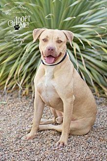 Adopt A Pet :: Derby  - Phoenix, AZ