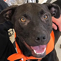 Adopt A Pet :: Bonner *Adopt or Foster* - Fairfax, VA