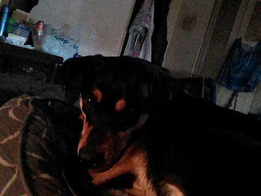 Mentor Oh Labrador Retriever Meet Ezekiel Zeke A Pet For Adoption