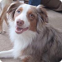 Adopt A Pet :: Hazard - Minneapolis, MN