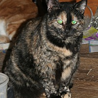 Adopt A Pet :: Scootie (COURTESY POST) - Baltimore, MD