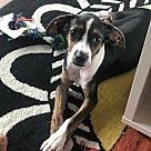 Adopt A Pet :: Drumstick