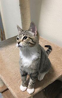Adopt A Pet :: Thelma  - Moose Jaw, SK