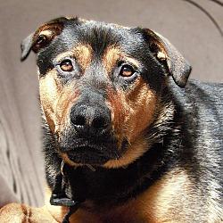 Puppies for Sale in White Rock British Columbia - Adoptapet com
