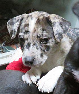 Adopt A Pet :: Topeka  - Saint Paul, MN