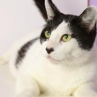 Adopt A Pet :: Elizabeth Taylor - Baton Rouge, LA