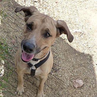 German Shepherd Dog Mix Dog for adoption in Phoenix, Arizona - Rosie