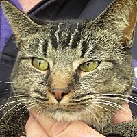 Adopt A Pet :: Alexa - Germantown, MD