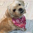 Adopt A Pet :: Winter (Winnie)