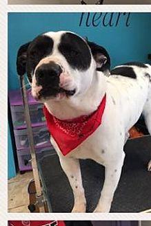 Adopt A Pet :: Bandit  - Waxhaw, NC