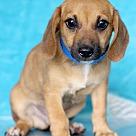 Adopt A Pet :: Ian