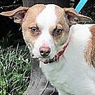 Adopt A Pet :: Bailey