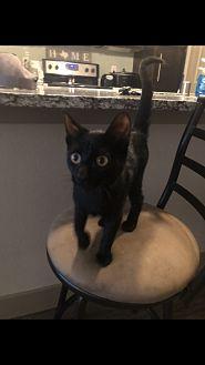 Adopt A Pet :: Chloe  - Dallas, TX
