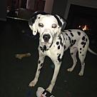 Adopt A Pet :: Prince (COURTESY POST)