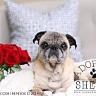 Adopt A Pet :: Shelby