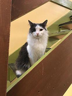 Adopt A Pet :: Missy  - Blasdell, NY