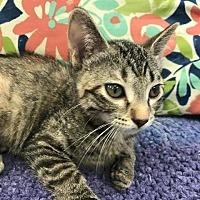 Adopt A Pet :: Chancy - Saint Robert, MO