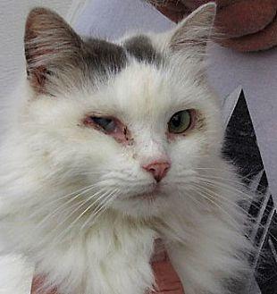 Bengal Cat Rescue Md