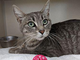 Adopt A Pet :: Pearl  - Laramie, WY