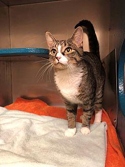 Adopt A Pet :: Sophie  - Moose Jaw, SK