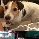 Adopt A Pet :: Henry/JD