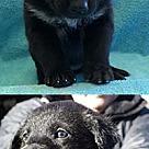 Adopt A Pet :: Socks' Nicole