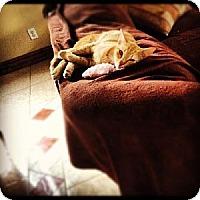 Adopt A Pet :: Frankie - St. Cloud, FL