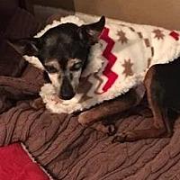 Adopt A Pet :: Martha - Brooksville, FL