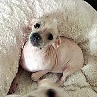Adopt A Pet :: Winnie - Marina del Rey, CA
