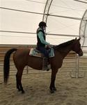 Adopt a Pet :: BELLA - Methuen, MA -  Quarterhorse