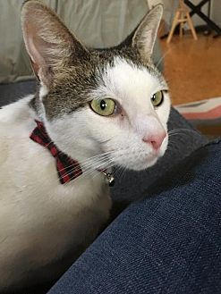 Adopt A Pet :: Graham  - Warminster, PA