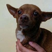Adopt A Pet :: Wilma - Willows, CA