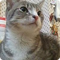Adopt A Pet :: Tzia - New York, NY