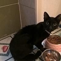 Adopt A Pet :: JINX - Brea, CA