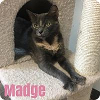 Adopt A Pet :: Madge - Harrisville, WV